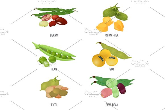 Beans Species Set Healthy And Nutritious Natural Food