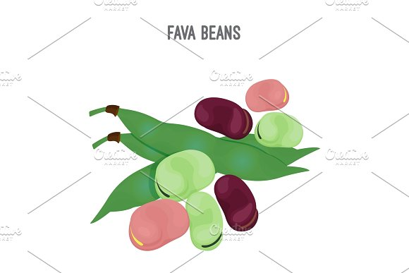 Exotic Fava Beans Heap Nutritious And Healthy Food