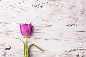 Violet flower on a white wooden background.