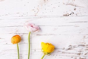 Yellow flowers on a white wooden background.