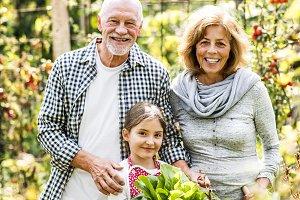 Senior couple with granddaughter gardening in the backyard garden.