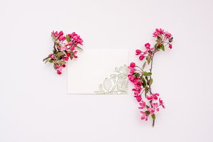 Cherry blossoms and stationery