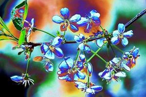 Flowers fantasy 1