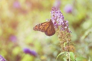 Summer Flutter