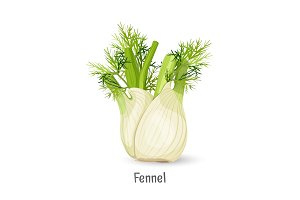 Florence fennel or finocchio selection with swollen, bulb-like stem