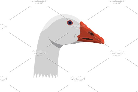Color Image Goose's Head On A White
