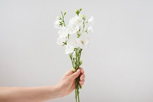Small bouquet of campanula in a woman's hand with yellow nail polish on a white background, copy space