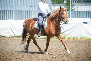 Training in horse riding, entry level. Cavaletti on a trot