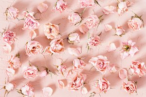 Tender pattern of dried pink roses