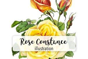 Florals: Vintage Rose Constance