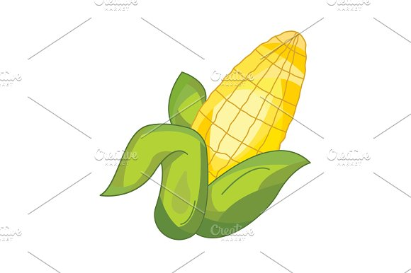 Color Vector Illustration Corn