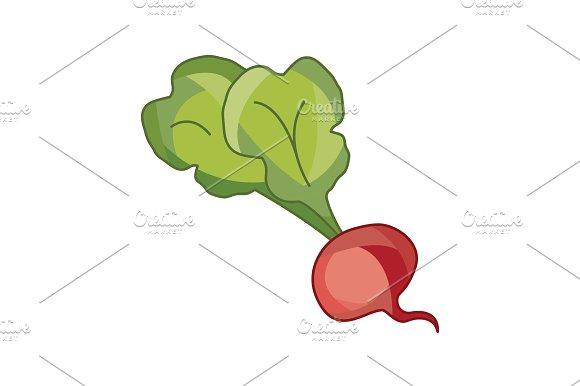 Vector Illustration Beet Beetroot