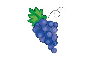 Color vector illustration. Grapes
