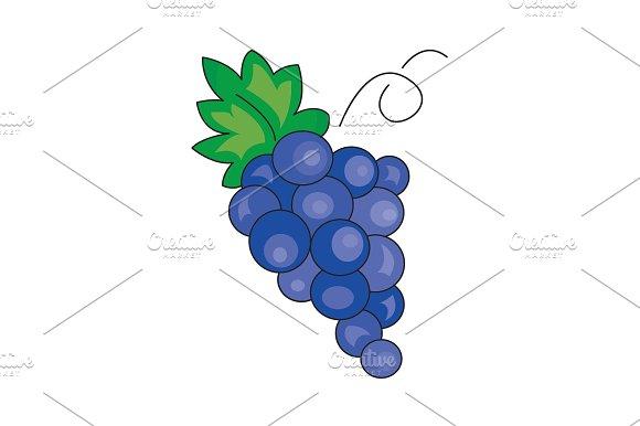 Color Vector Illustration Grapes