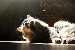 Cat washes lying on the floor in the sunlight