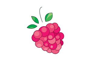 vector illustration. Raspberries
