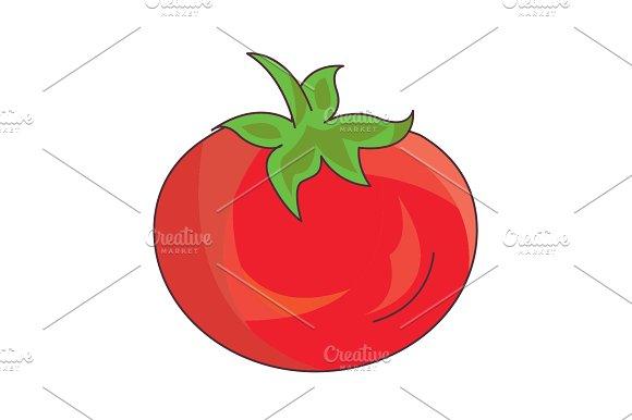 Color Vector Illustration Tomato