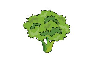 Color vector illustration. Broccoli