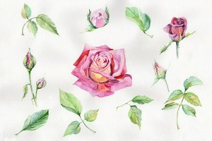 Wildflower delicate pink rose PNG se