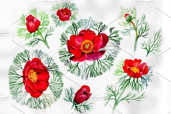 Bloom Red Roses Watercolor PNG Set