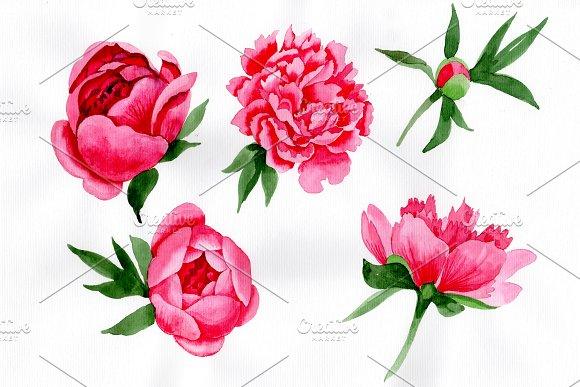 Tender Wildflower Pink Peony PNG Set