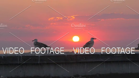 Seagulls Against Sea And Sunset Background