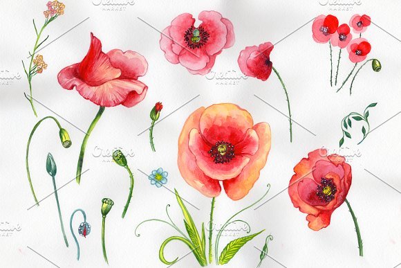 Field Red Poppies PNG Watercolor Set