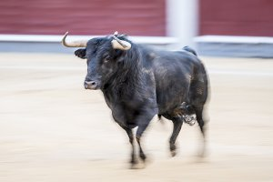 Bullfight in Madrid Spain