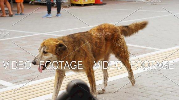 Stray Dog Walking Along The Street