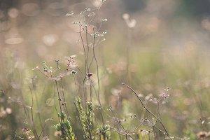 Sun on Wild Grasses