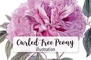 Florals: Vintage Curled Tree Peony