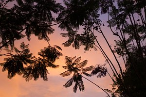 Branches of palm trees on background of a beautiful summer sunset