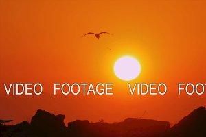 Sea gull flying in orange sunset sky