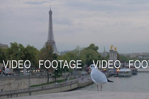 Paris cityscape with waterfront, Eiffel Tower and flying gull