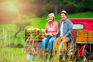 Senior couple sitting in pickup truck, apple harvest