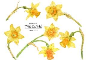 Watercolor Wild Daffodil