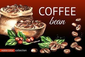 Coffee bean. Watercolor collection
