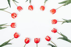 red tulips and empty frame for text