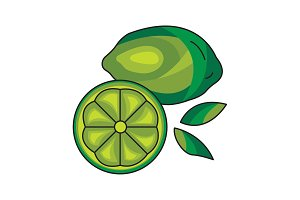 Lime vector icon on a white
