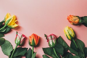 Colourful roses on a pink background