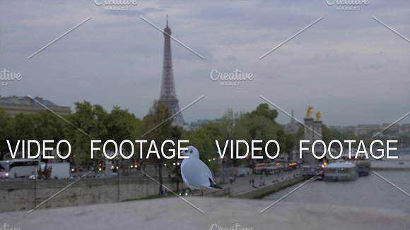 Gull Against Evening Paris View With Eiffel Tower And Waterfront France