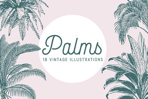 PALMS | 18 Vintage Vectors