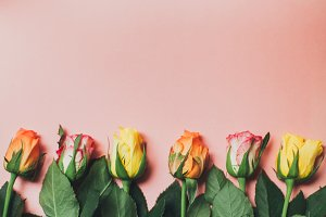 Flowers lined up on pink background