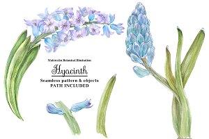Watercolor Hyacinth