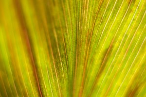 Leaf Texture 3