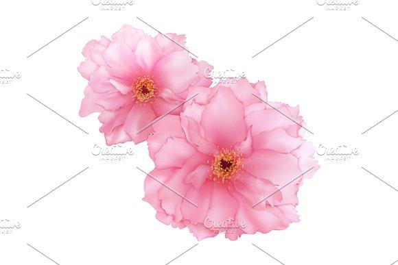 Vector 3D Pink Sakura Cherry Flower