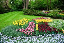Colorful tulip flowers in the park