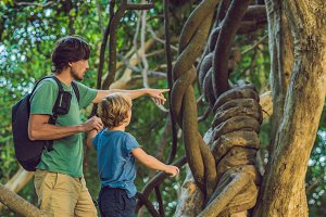 father and son watching tropical lianas in wet tropical forests