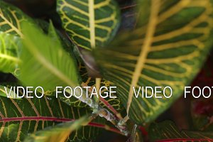 Tropical leafs jungle background. Closeup,