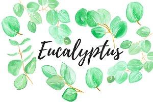 Watercolor Eucalyptus Clipart